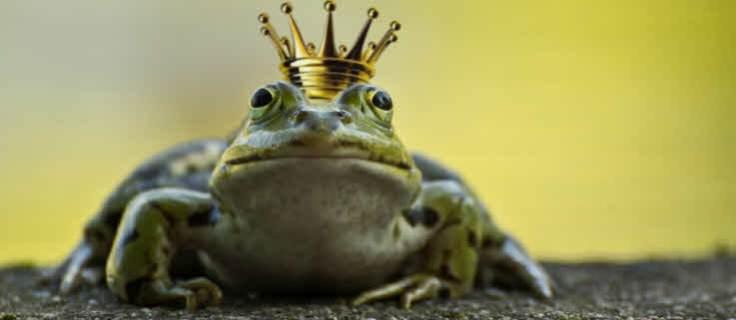 Wartender Froschkönig
